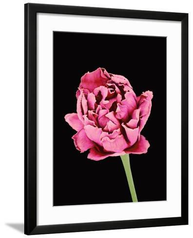 Baby's Breath Flower-Micro Discovery-Framed Art Print