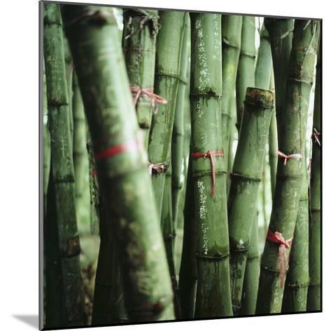 Bamboo Plants-Mika-Mounted Photographic Print