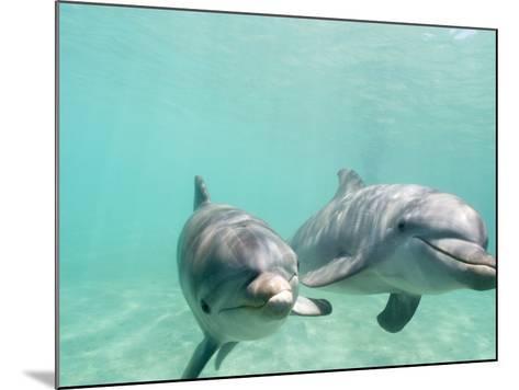 Bottlenose Dolphins-Stuart Westmorland-Mounted Photographic Print