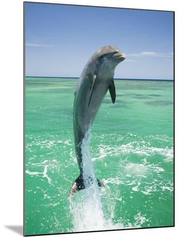 Jumping Bottlenose Dolphin-Stuart Westmorland-Mounted Photographic Print