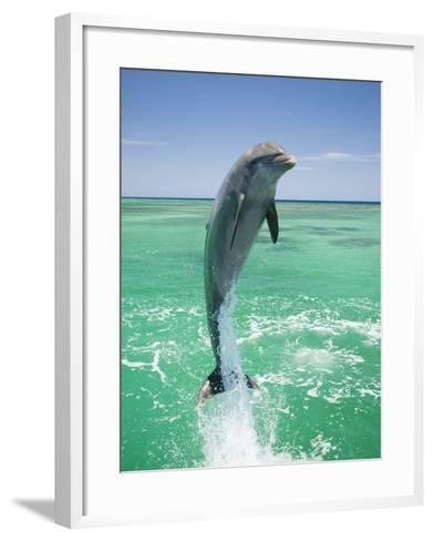 Jumping Bottlenose Dolphin-Stuart Westmorland-Framed Art Print