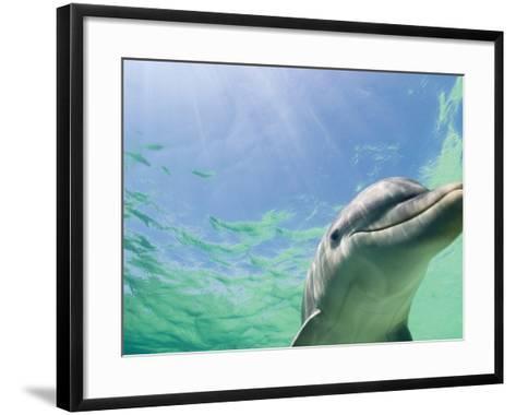 Bottlenose Dolphin-Stuart Westmorland-Framed Art Print