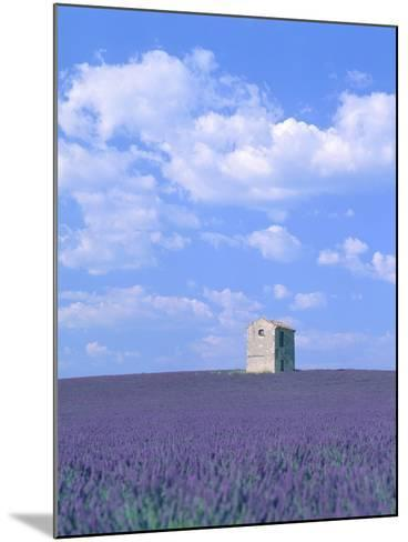 Blooming lavender and stone house in France-Herbert Kehrer-Mounted Photographic Print