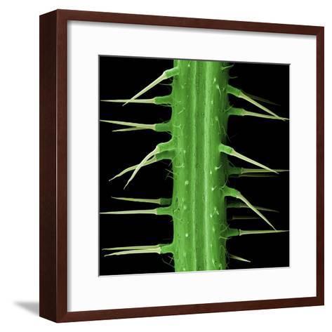Stinging Hair of Nettle--Framed Art Print