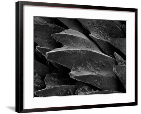 Shark Skin Scale--Framed Art Print