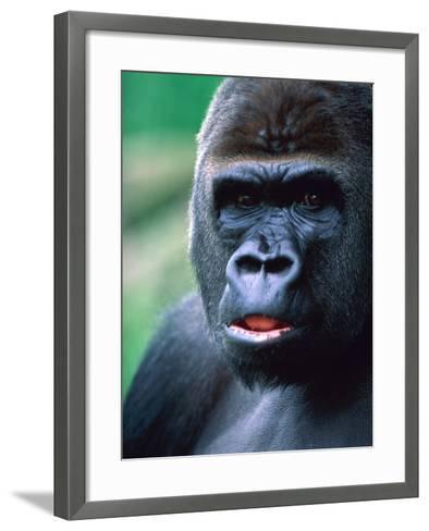 Gorilla-Frank Krahmer-Framed Art Print