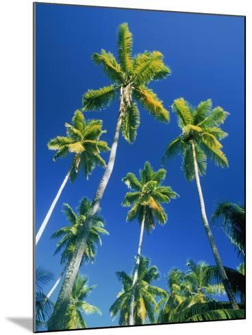 Palm trees, Seychelles, Africa-Frank Krahmer-Mounted Photographic Print