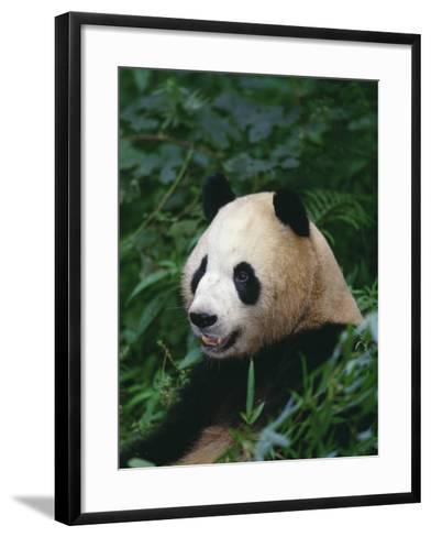 Giant Panda in Forest--Framed Art Print