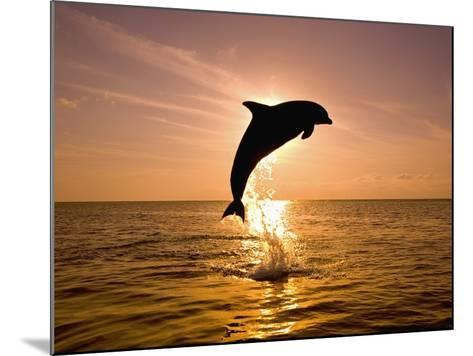 Dolphin Breaching at Sunset-Craig Tuttle-Mounted Photographic Print