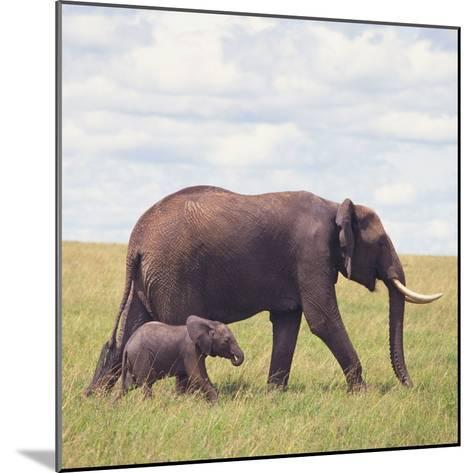 African Elephant Calf with Mother in Savanna--Mounted Photographic Print