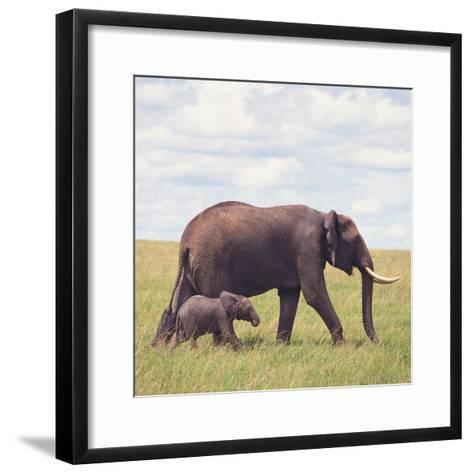 African Elephant Calf with Mother in Savanna--Framed Art Print