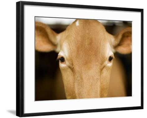 Head of Cow-Chris Carroll-Framed Art Print