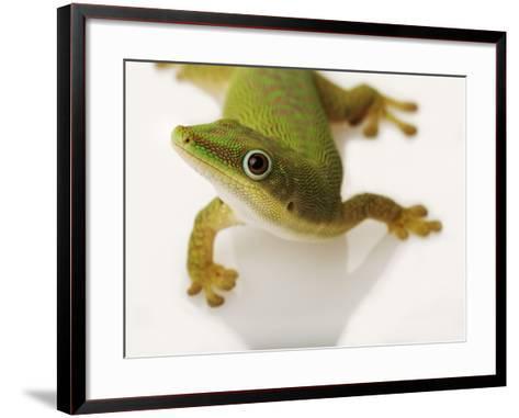 Day Gecko-Martin Harvey-Framed Art Print