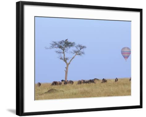 Ballooning Over Wildebeests-Arthur Morris-Framed Art Print