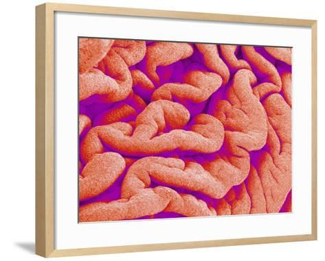 Pleat on Interior of Oviduct of a Rabbit-Micro Discovery-Framed Art Print