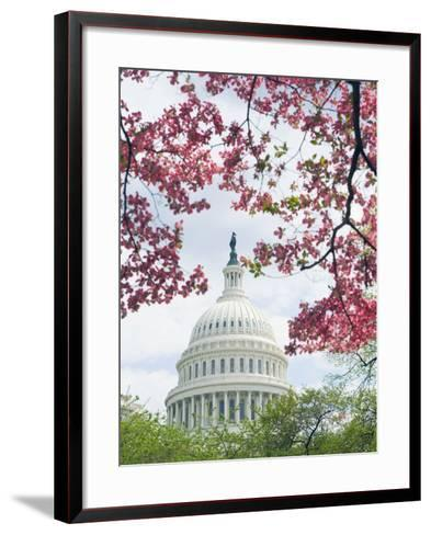 United States Capitol Dome in Washington, D.C. and Flowering Spring Trees-Tim Mcguire-Framed Art Print