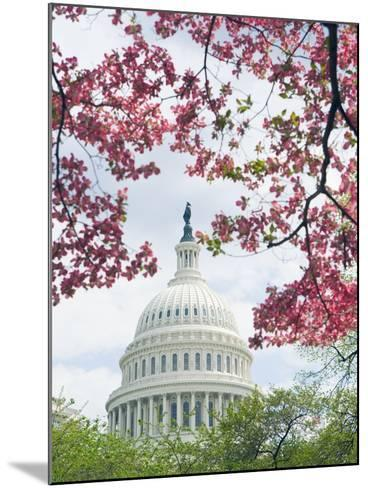 United States Capitol Dome in Washington, D.C. and Flowering Spring Trees-Tim Mcguire-Mounted Photographic Print