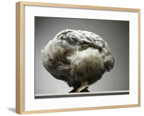 Chicken-Adrianna Williams-Framed Art Print
