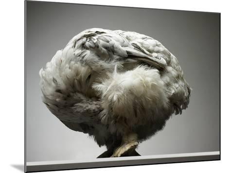 Chicken-Adrianna Williams-Mounted Photographic Print