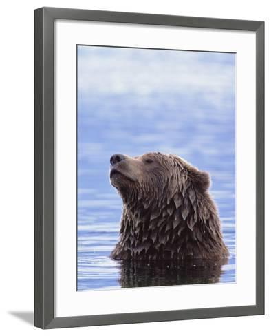 A Brown Bear Emerges from a Lake-John Eastcott & Yva Momatiuk-Framed Art Print