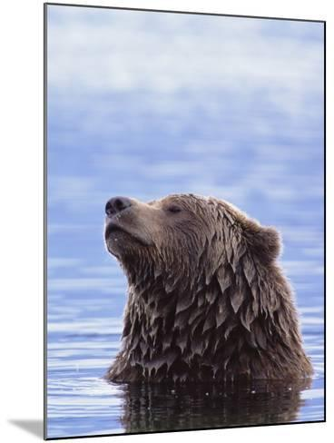 A Brown Bear Emerges from a Lake-John Eastcott & Yva Momatiuk-Mounted Photographic Print