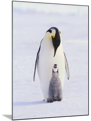 Emperor Penguin and Baby--Mounted Photographic Print