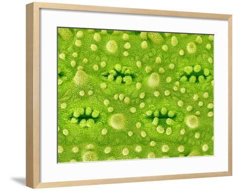 Stomata on Rice Plant Leaf-Micro Discovery-Framed Art Print
