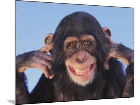 Chimpanzee--Mounted Photographic Print