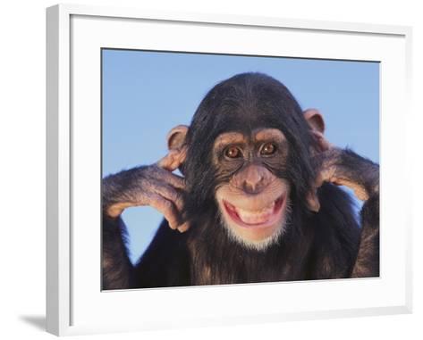 Chimpanzee--Framed Art Print