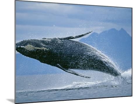 Breaching Humpback Whale-Paul Souders-Mounted Photographic Print
