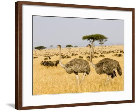 Ostriches and Wildebeests-Hal Beral-Framed Art Print