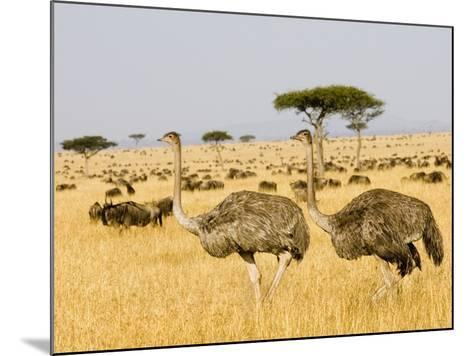 Ostriches and Wildebeests-Hal Beral-Mounted Photographic Print