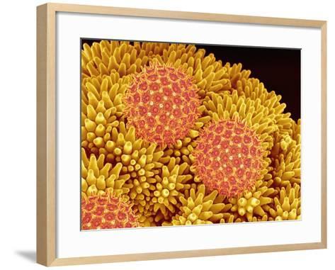 Pollen on Morning Glory Pistil-Micro Discovery-Framed Art Print