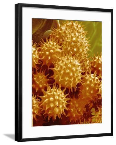 Sunflower Pollen-Micro Discovery-Framed Art Print