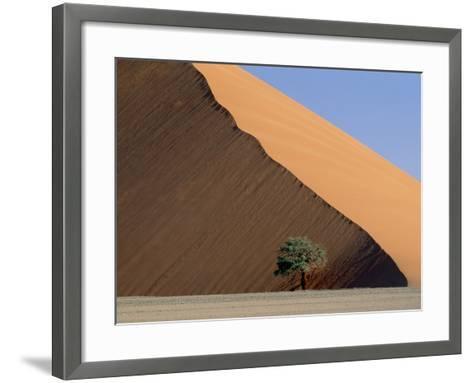 Acacia at the hillside of a dune in Namib Naukluft Park-Frank Lukasseck-Framed Art Print