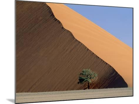 Acacia at the hillside of a dune in Namib Naukluft Park-Frank Lukasseck-Mounted Photographic Print