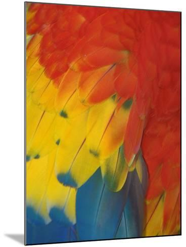 Scarlet Macaw Feathers-Bob Krist-Mounted Photographic Print