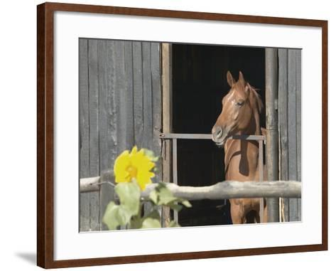 View of a horse in a stable--Framed Art Print