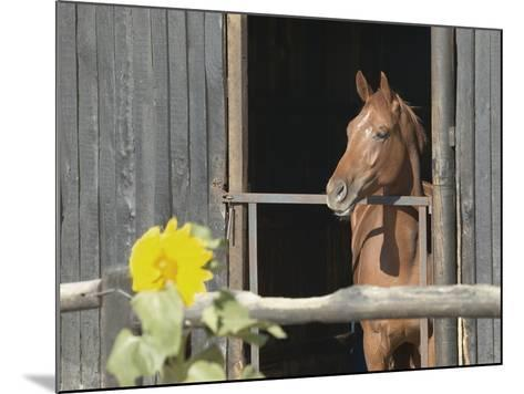 View of a horse in a stable--Mounted Photographic Print