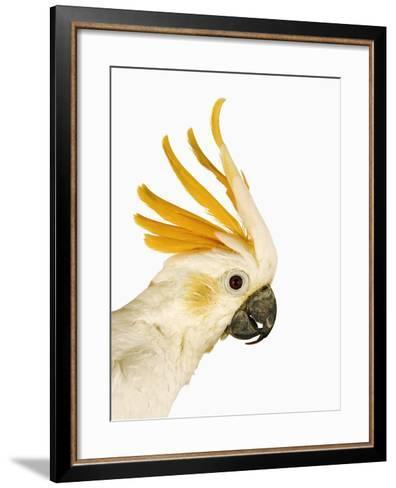Cockatiel-Martin Harvey-Framed Art Print