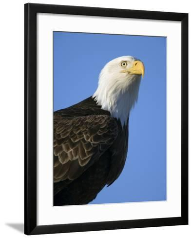 American Bald Eagle-Paul Souders-Framed Art Print