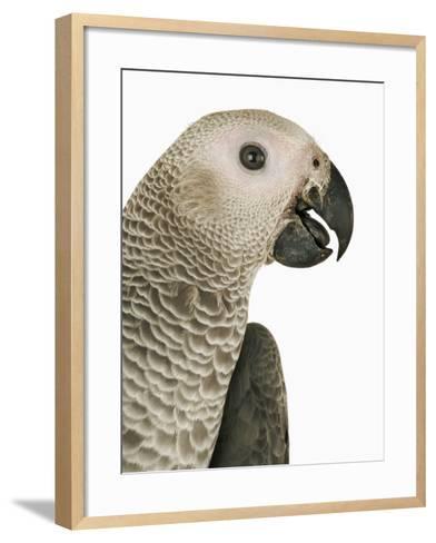 Grey Parrot-Martin Harvey-Framed Art Print