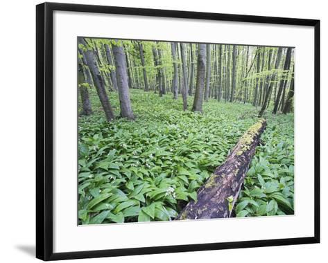 Trees in Forest-Frank Lukasseck-Framed Art Print