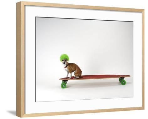 Chihuahua on a Skateboard-Chris Rogers-Framed Art Print