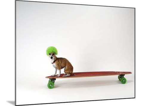 Chihuahua on a Skateboard-Chris Rogers-Mounted Photographic Print