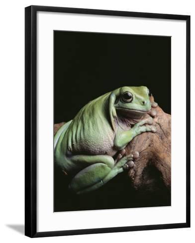 Green Tree Frog--Framed Art Print