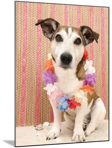 Dog with Lei-Ursula Klawitter-Mounted Photographic Print