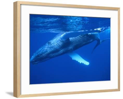 Humpback Whale--Framed Art Print