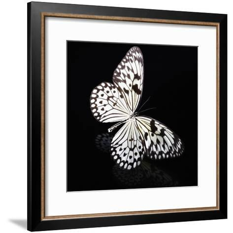 Butterfly-Sean Justice-Framed Art Print