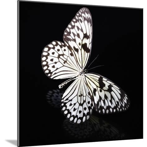 Butterfly-Sean Justice-Mounted Photographic Print